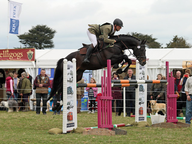 Sports Horse Stud in Somerset and UK